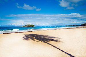 Heerlijk paradijs eiland met je wuivende palmboom.