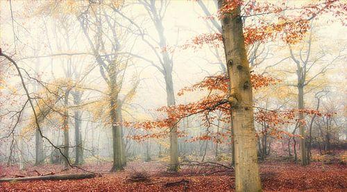 Met de mist achter