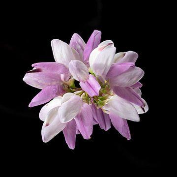 Blühendes aus der Natur von Andreas Hackl
