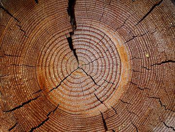 boomstam van Marieke Funke