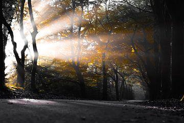 Herfst. van Sebastiaan Peek