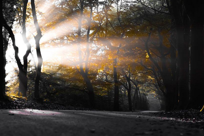 Im Herbst. von Sebastiaan Peek