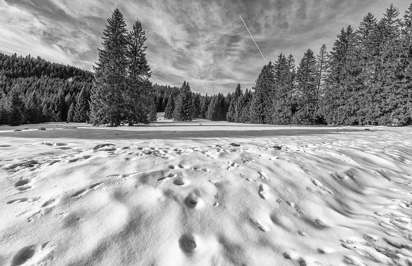 Schwarzwald von Wim Mourits
