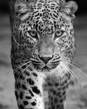 Le léopard s'adresse à vous en noir et blanc sur Patrick van Bakkum