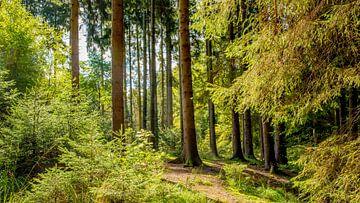 Wald Landschaft im Sommer von Günter Albers