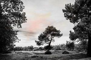 Lichte kleuren in zwart-wit landschap van Irene Lommers