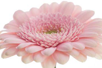 Soft Flower van Janny Kleijn