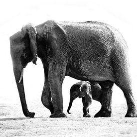 olifant met jong van Henk Langerak