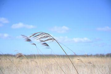 wind van Martin Baartmans