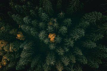 In Vogelvlucht over het Bos van Sophia Eerden