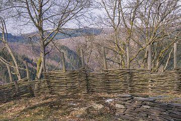 Fijne wandelingen in de natuur van de Ardennen van Nynke Nicolai
