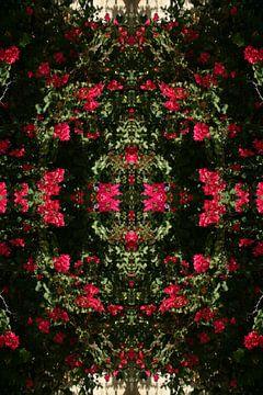 Bougainvillea abstracte kunst van Humphrey Janga