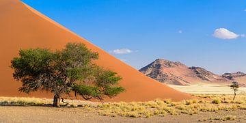 Baum vor der Düne im Sossusvlei von Denis Feiner