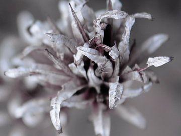 Detail im Silbertönen von geen poeha