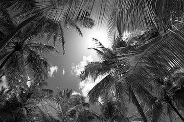Palmen in Schwarz-Weiß von Reis Genie