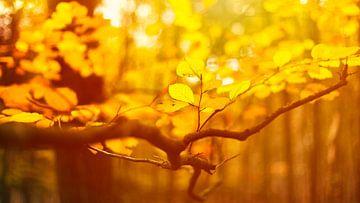 Nederlandse herfst van Richard Driessen