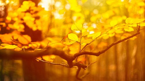Nederlandse herfst van