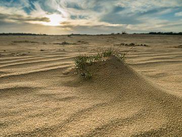 Zandvlakte van de Loonse en Drunense duinen van Moniek van Rijbroek