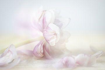 Tulpe mit losem Balad von natascha verbij