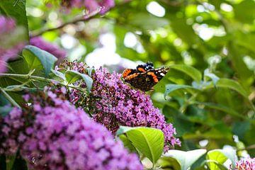 Vlinder op paarse bloem von Erik Koks