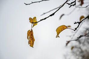 Dernières feuilles d'automne colorées sur des branches nues dans un ciel d'hiver gris, concept wabi