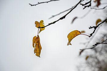 Letztes farbiges Herbstlaub auf kahlen Zweigen vor grauem Winterhimmel, Wabi-Sabi-Konzept für die Ve
