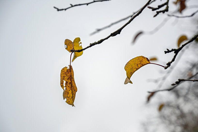 Dernières feuilles d'automne colorées sur des branches nues dans un ciel d'hiver gris, concept wabi  sur Maren Winter