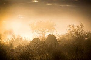 Glowing Mist