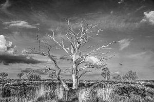 Baum ohne Farbe von Wim Beunk