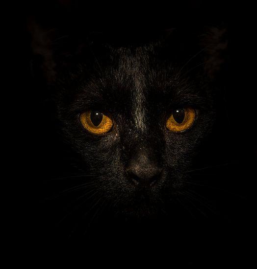 Black Cat, Yellow Eyes...