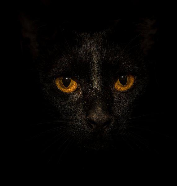 Black Cat, Yellow Eyes... van Marcel van der Stroom