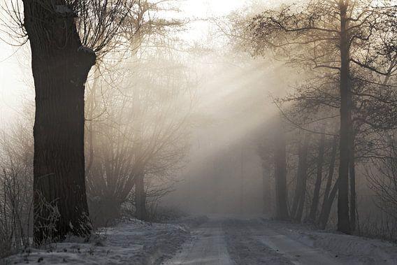 misty forest  van Dirk van Egmond