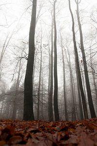 bewogen bomen ii/iii