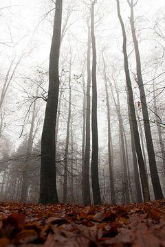 bewogen bomen ii/iii van joas wilzing