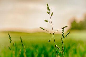 Grassen in het zaad van Ronald De Neve