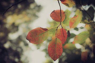 Herfst van Marjolein Boltjes