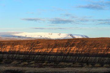 IJsland in goudkleur van Annelies Huijzer