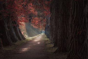 Autumn Lane von Patricia Beerens