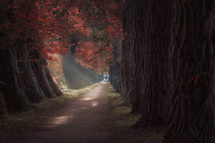 Autumn Lane van Patricia Beerens