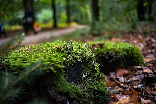 Geweizwam in het mos van een herfstbos