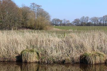 Graspollen von Evert Jansen
