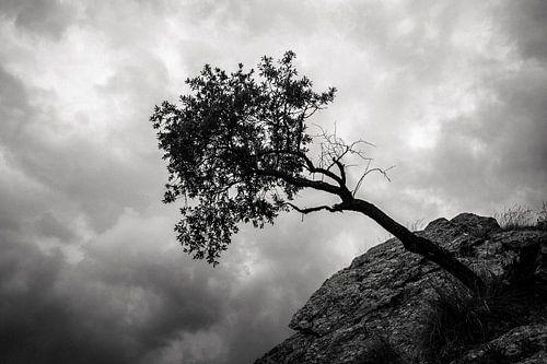 Hangende boom in de Sierra Nevada van Martijn Smeets