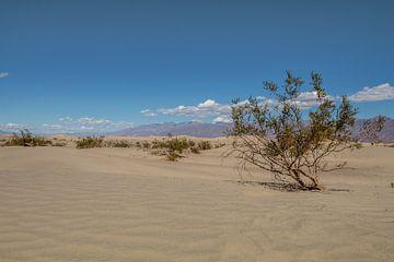 Death valley struik van Robert Dibbits