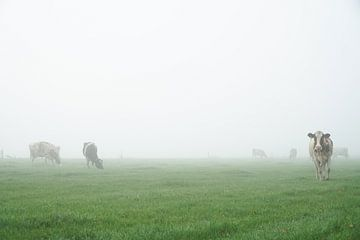 naderende koe in mistig weiland von Karin in't Hout
