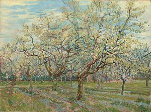 White Orchid - Vincent van Gogh  van