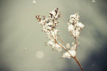 Winter Flower van Malte Pott