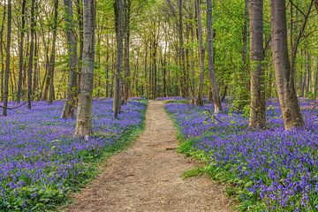 Forêt de fleurs bleues sur Michael Valjak