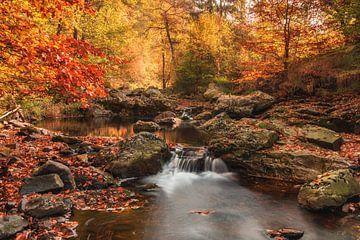Belgische Ardennen van Jan Koppelaar
