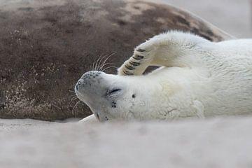 zeehonden puppy ligt tegen moeder aan van Desirée Couwenberg