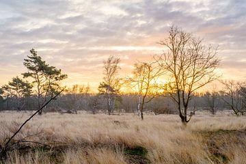 Der Teut-Sonnenaufgang von Johan Vanbockryck